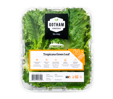 Tender, delicate and mildly flavored, our special green leaf is similar to romaine and contains high quantities of vitamins A and K, plus important antioxidants beta carotene and lutein. The word lettuce is derived from 'lac', which is Latin for 'milk' referring to the leaves' milky fluid.
