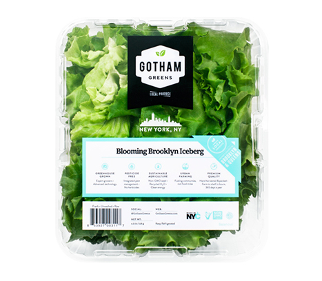 Unlike its more common cousin, our leaf lettuce version of 'Iceberg' is grown as an open instead of closed head. Full of flavor, these crunchy stems and tender leaves are characterized by the crispness of the traditional Iceberg 'head' yet packed with flavor and nutrients. It holds the perfect amount of dressing. A true Brooklyn original.